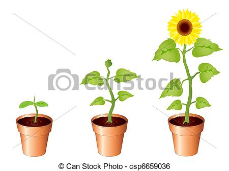 Bud clipart sunflower Of Sunflowers Sunflowers through