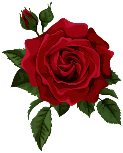 Drawn red rose blooming rose Transparent Transparent Picture Art Art