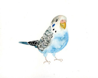 Budgie clipart blue and yellow Print Etsy Watercolor 7x5inch print