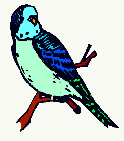 Budgie clipart Budgie Budgie Download #8 clipart