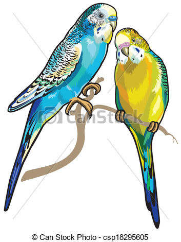 Budgerigars clipart Australian isolated parakeets on of