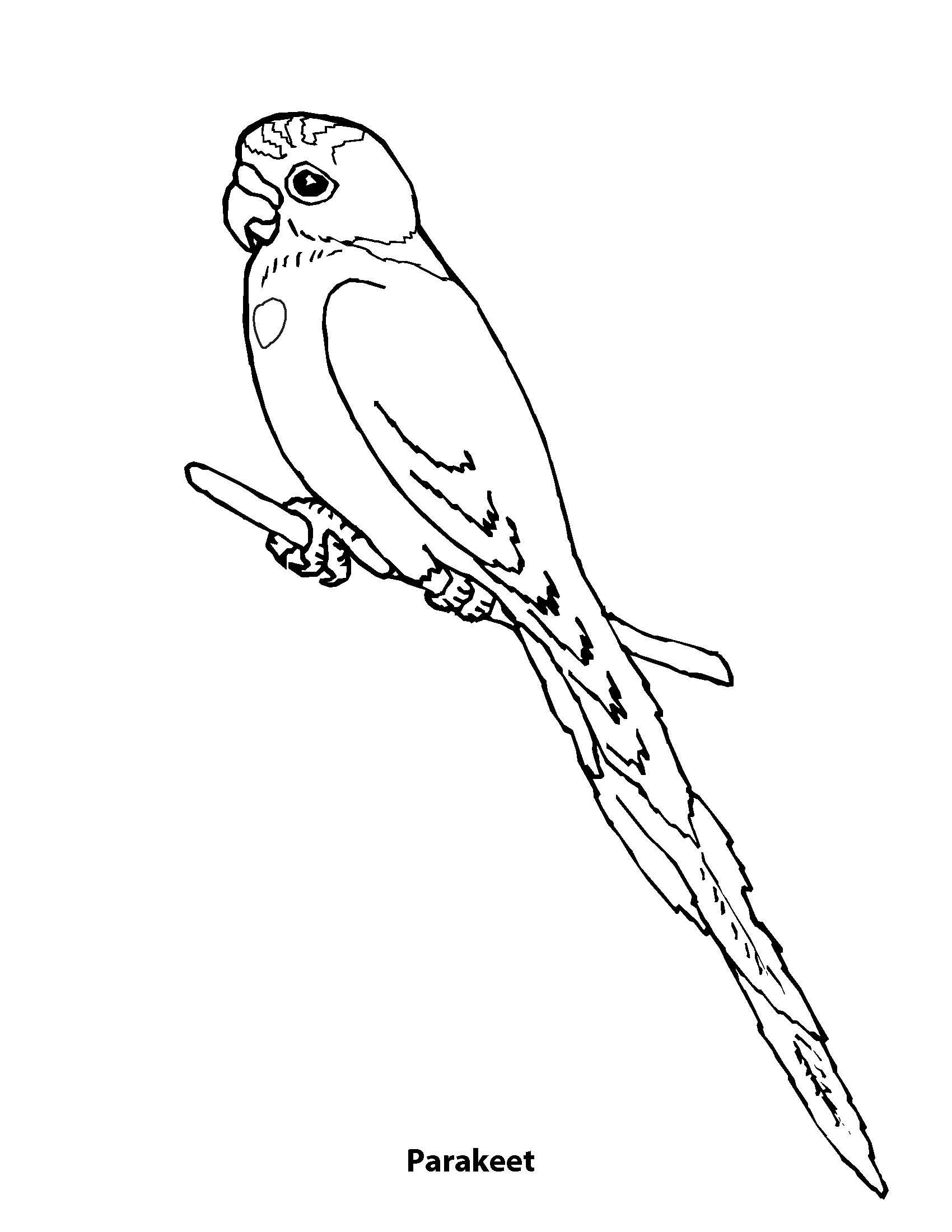 Budgie clipart black and white  Index /documents/coloringbook/images of