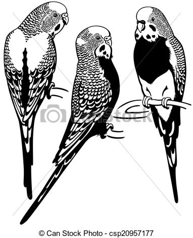 Budgerigars clipart budgie White black Vector  budgerigars