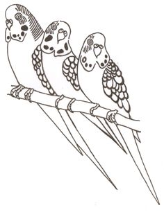 Budgie clipart black and white  zazzle coloring Pinterest page