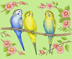 Budgie clipart blue and yellow And cake for Artwork embroidery