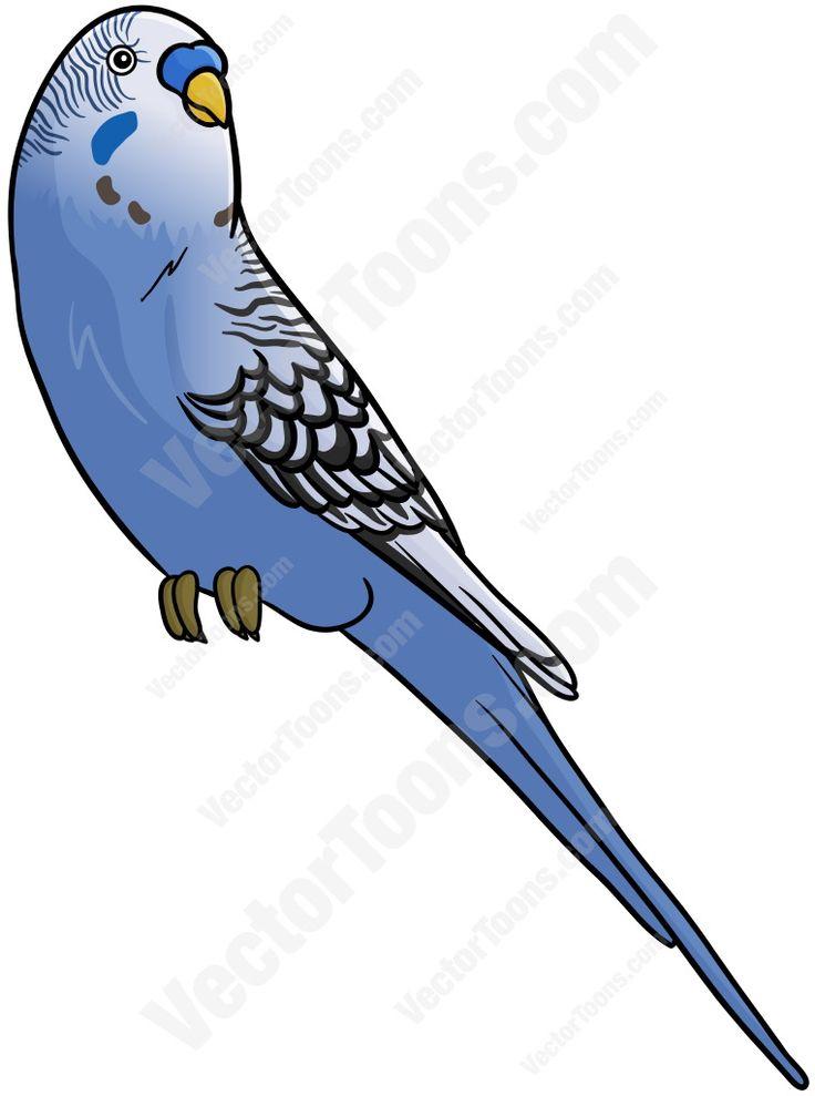 Budgerigars clipart blue Cartoon about on 17 Pinterest
