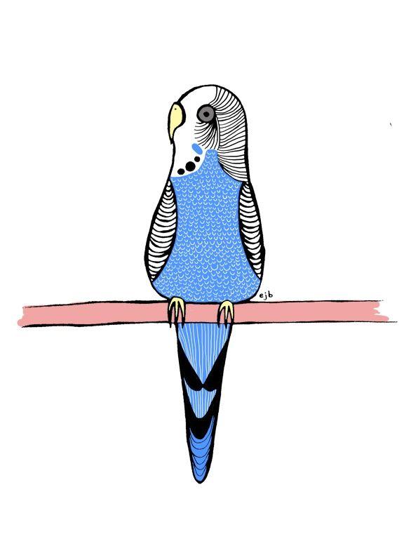 Budgerigar clipart pet bird  Love about images 761