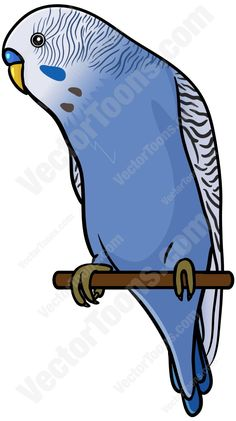 Budgerigars clipart blue Perched Clipart  (Melopsittacus A