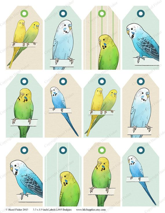 Budgie clipart pet bird Best Download Instant images Printable