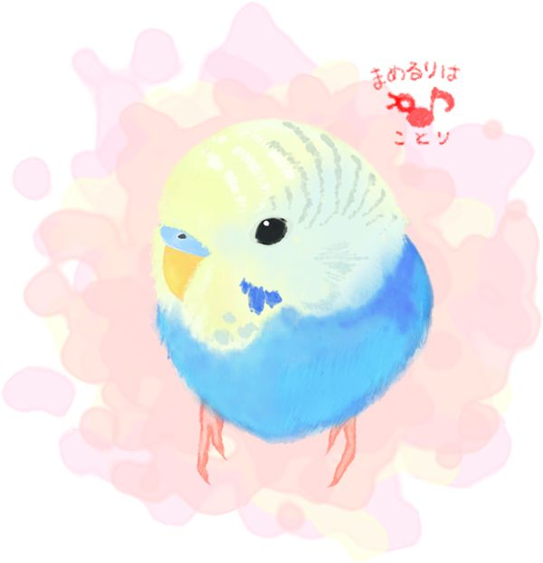 Budgie clipart pet bird Pinterest on Budgies images PAGE