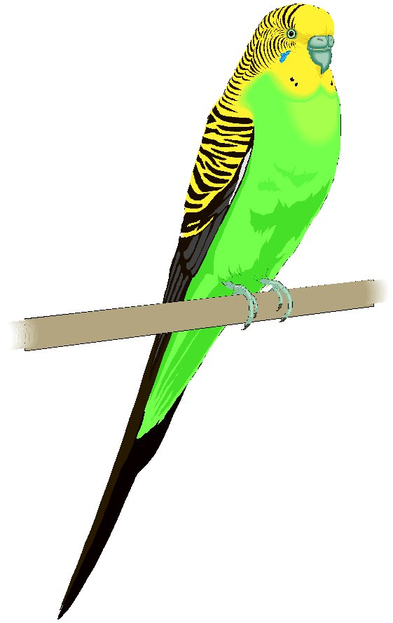Budgie clipart Budgie Budgie Download #5 clipart