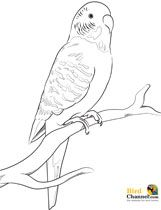 Budgie clipart black and white For Colouring Pinterest colouring pages
