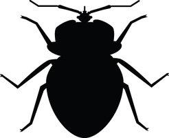 Bug clipart Bug Black bug Art collection