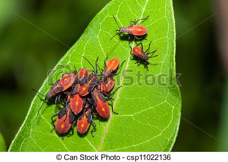 Bugs clipart aphid Insects Pictures Plant infestation on