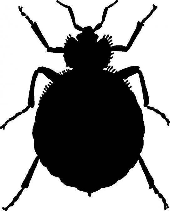 Bugs clipart bed bug :: Responsible of Loss Quick