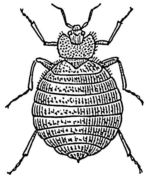 Bug clipart bed bug Bed bed Clipart bugs bugs