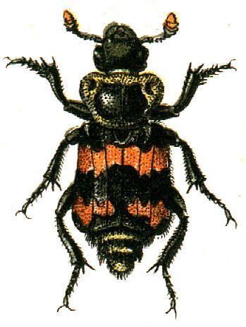 Bug clipart creepy Fairy Creepy Clip Cliparts Cliparts