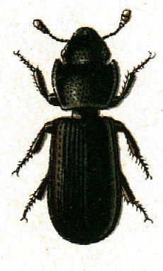 Bug clipart creepy Black Orange Clip clipart bug