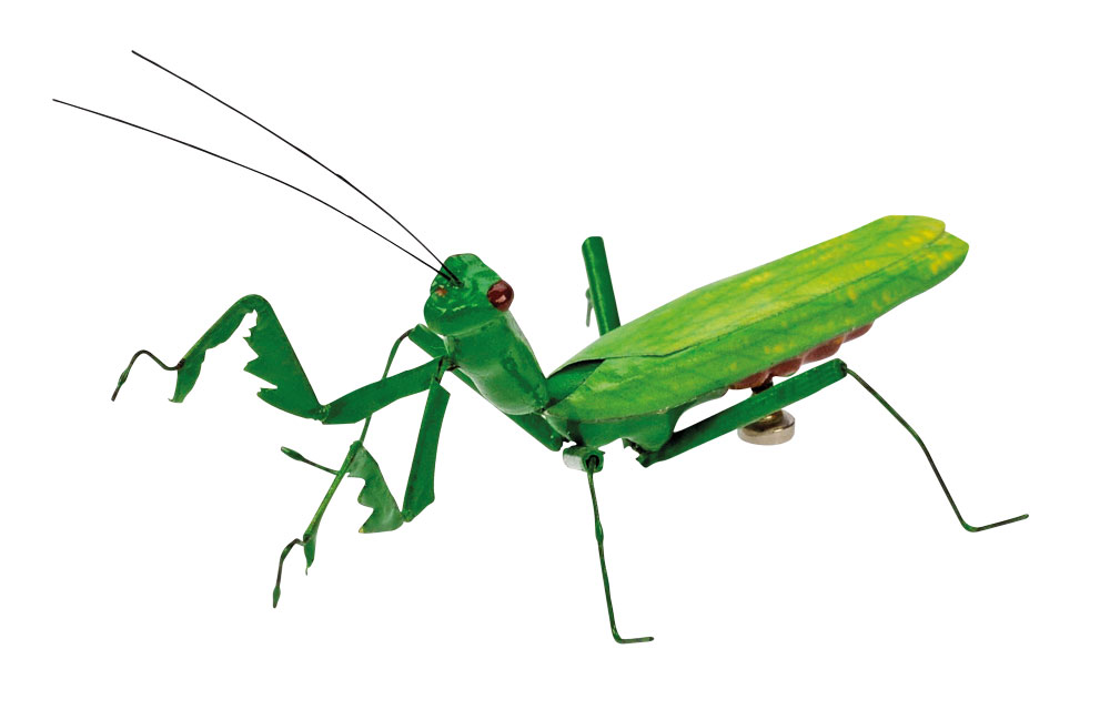 Bug clipart cricket Co 2017 Clipart rights Gallery
