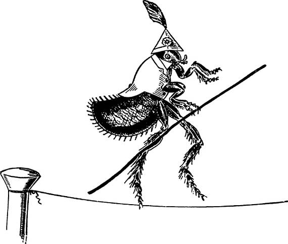 Bugs clipart flea Digital tightrope on flea bugs