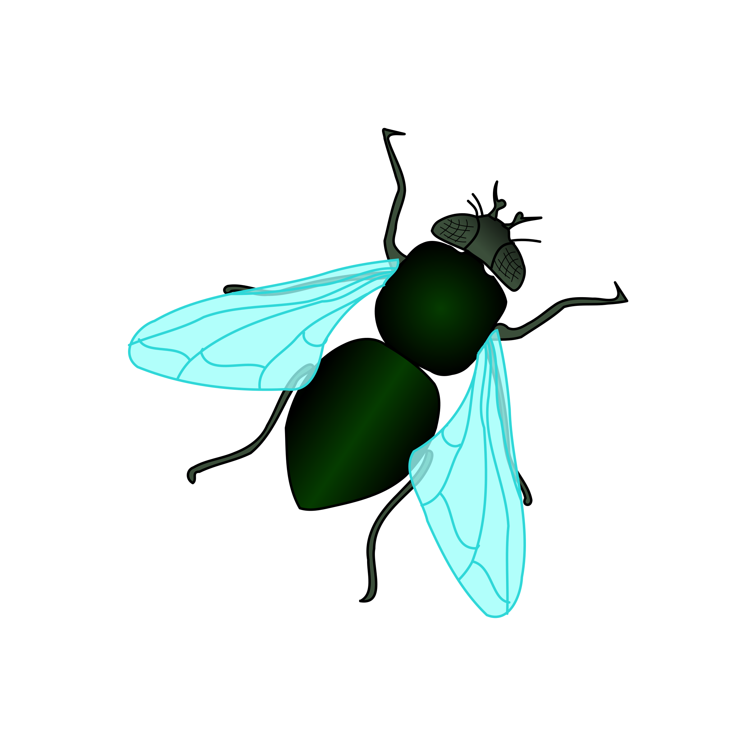 Bugs clipart house fly House House Green Clipart Green