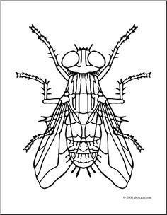 Bugs clipart house fly Bug Clip Printable Fly Download