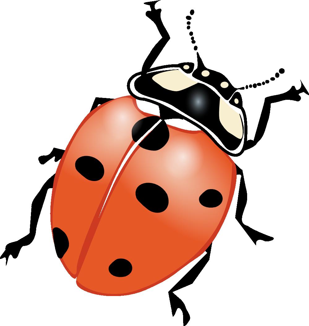 Bug clipart illustration Lady%20bug%20on%20flower Clipart Panda Images On