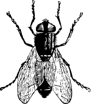 Bug clipart logo Animals free clip Bug clipart