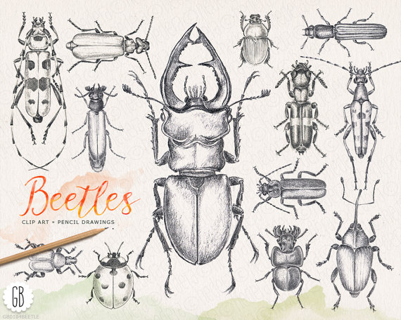 Bug clipart pencil Inspired insect from vintage stationery