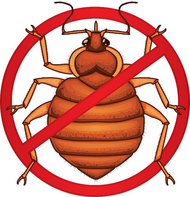 Bugs clipart silly Photos bugs do Bug Bed