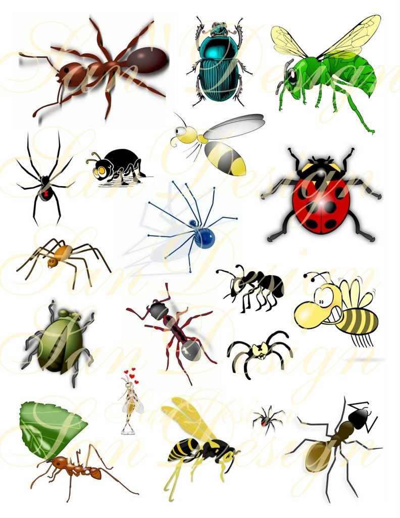 Bugs clipart Clipart Bugs  Bugs Clipart