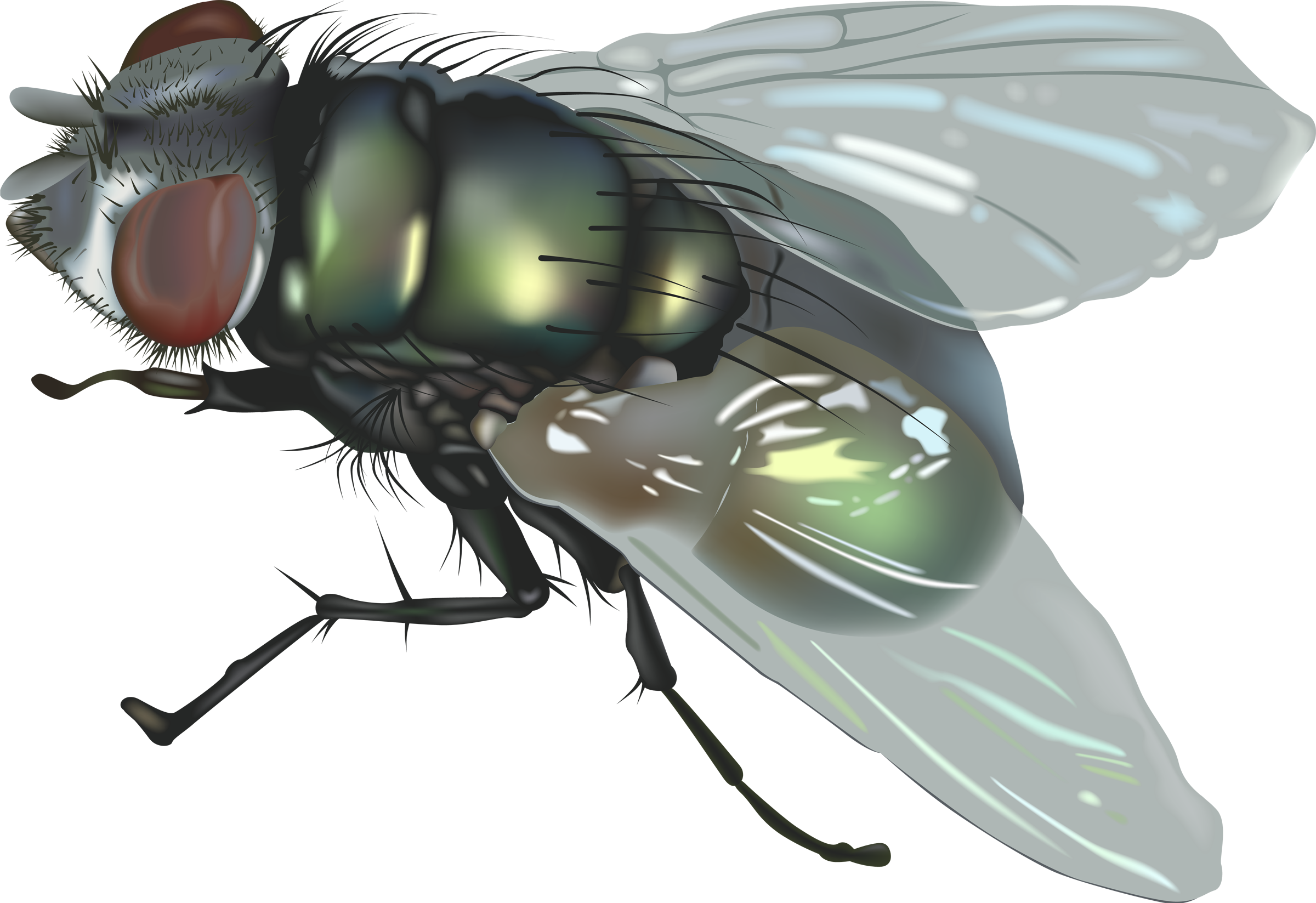 Bugs clipart house fly PNG pictures image fly fly