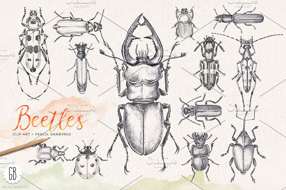 Bugs clipart pencil Bugs ~ Hand beetles pencil