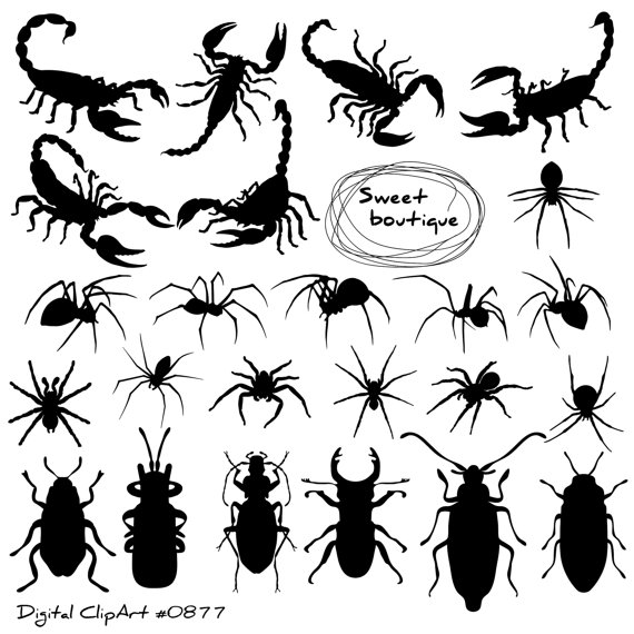 Bugs clipart spider Insects Clip from Scorpio Scorpio