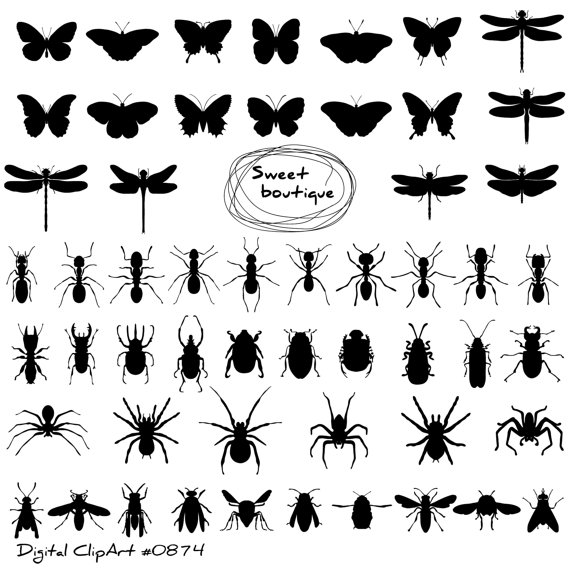 Bugs clipart spider Bugs spider 0874 Insects Insects