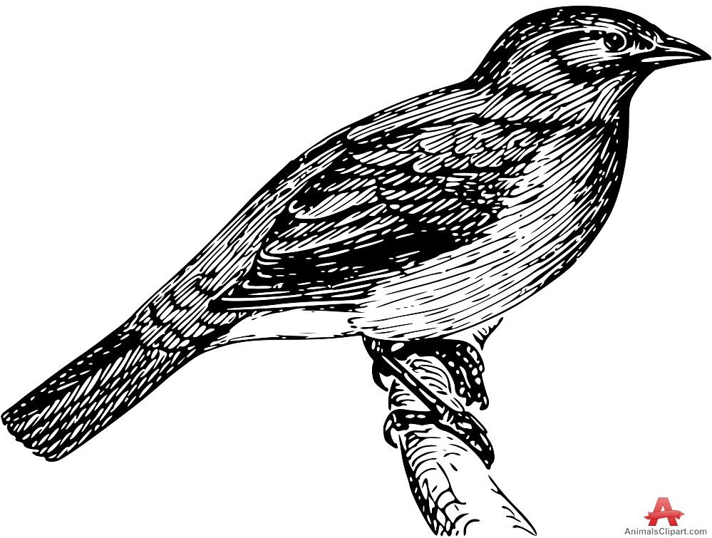 Bulbul clipart Clipart Bulbul Clipart Bird Bulbul