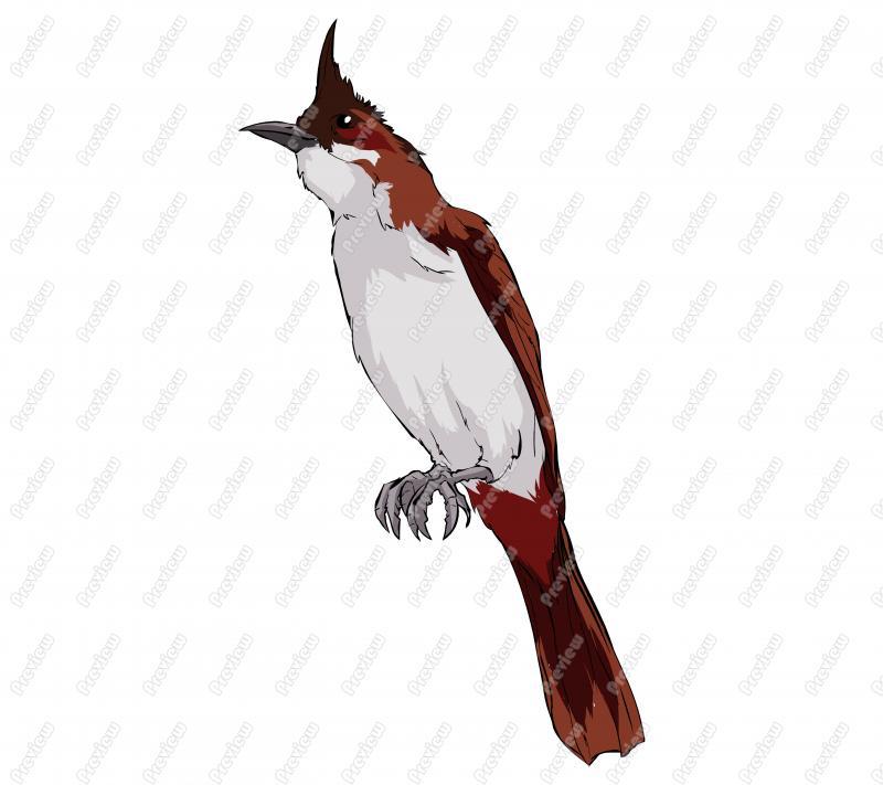 Bulbul clipart Bulbul Bird Realistic Red Realistic