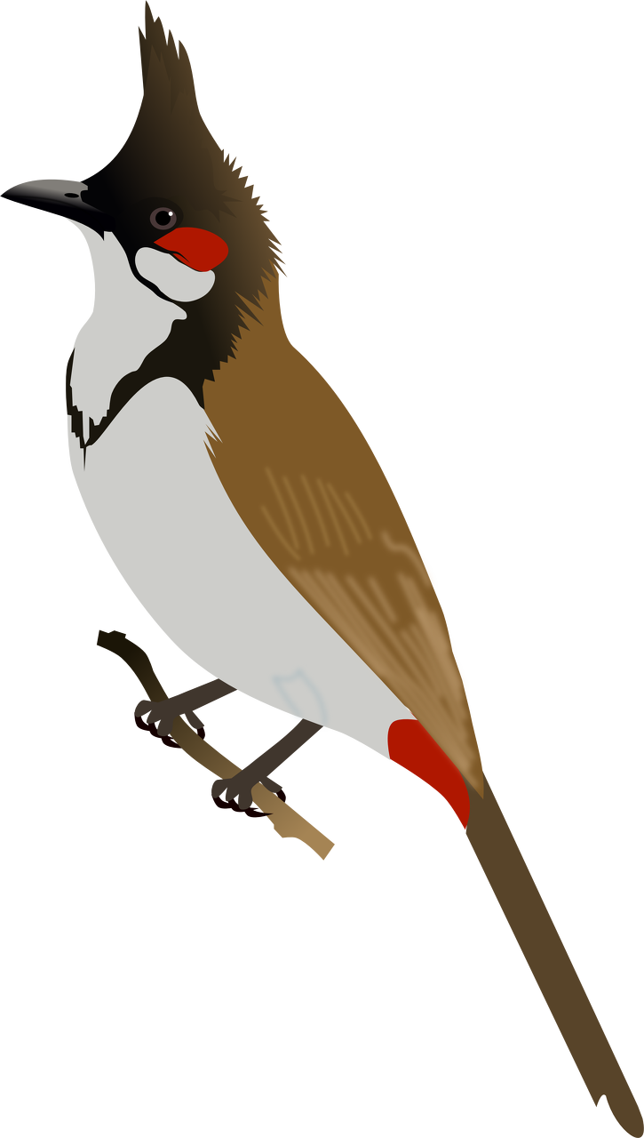 Bulbul clipart bird #1 Download clipart Download drawings