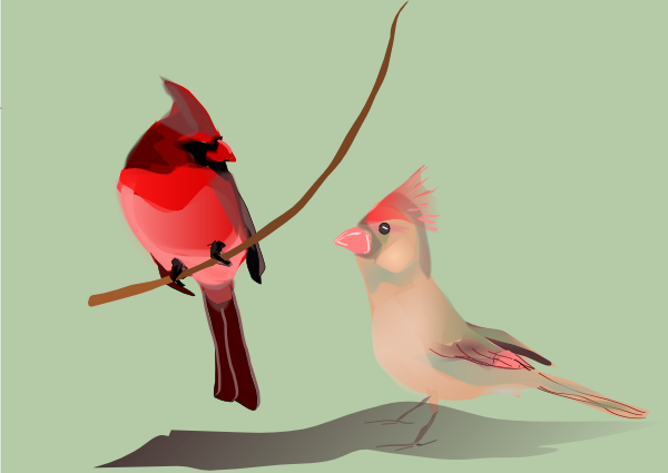 Bulbul clipart robin Clip Download Birds Talking image