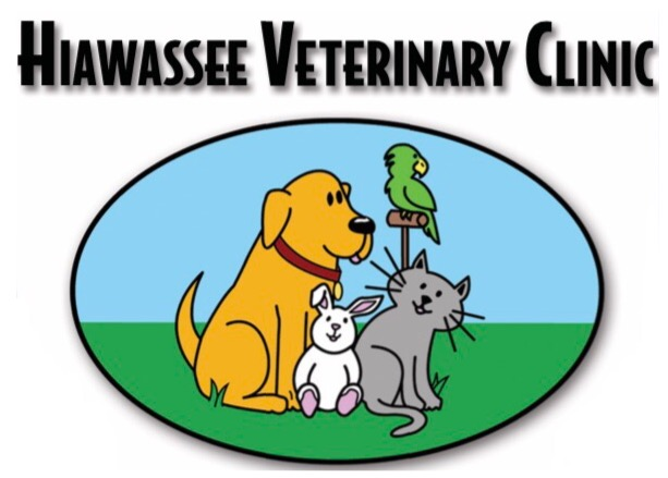 Building clipart vet clinic Home Orlando Hiawassee Hiawassee In