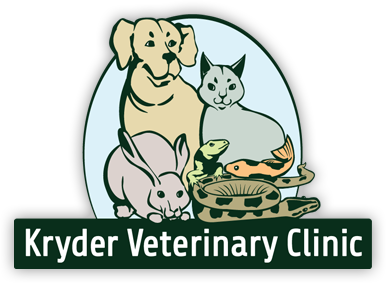 Building clipart veterinary clinic Clinic  South Veterinary in