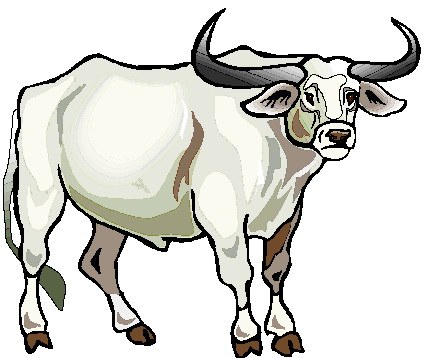 Red Bull clipart indian Clip art Bulls Clip Art