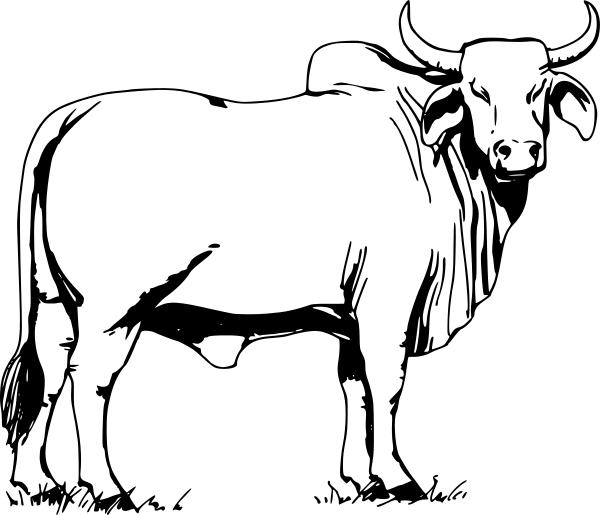 Red Bull clipart brahman bull #8