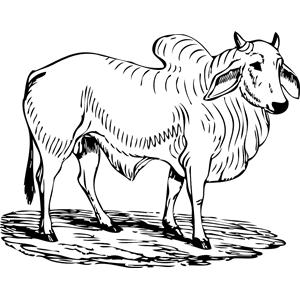 Bull clipart brahman Eps download clipart Brahma cliparts