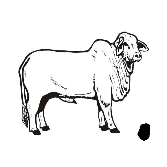 Bull clipart brahman Cow photo#22 Brahman Drawing cow