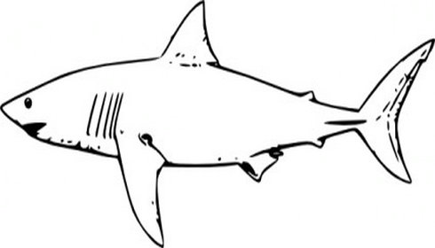 Bull Shark clipart Images Free Images Clipart Shark