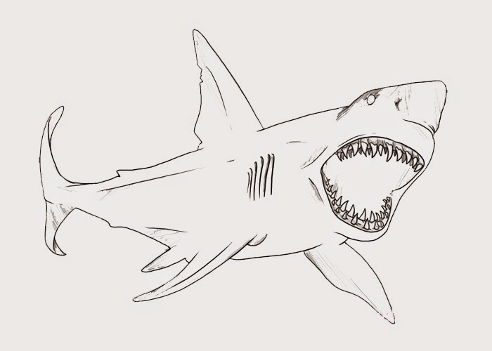 Bull Shark clipart coloring page Coloring shark Page Coloring Bull