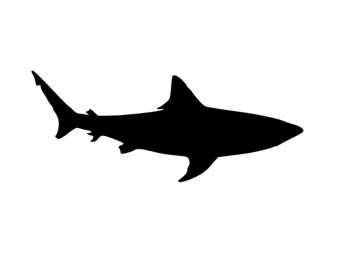 Bull Shark clipart stencil Pack from Mat Made Board