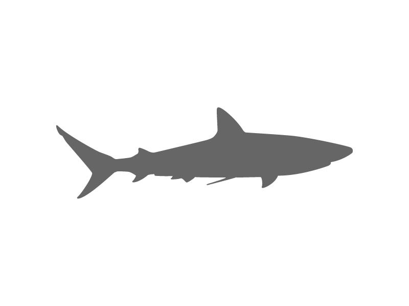 Bull Shark clipart stencil Shark Craftcuts Stencils com Ocean