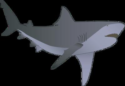 Bull Shark clipart symbol Photo#27 Shark Illustration illustration Shark